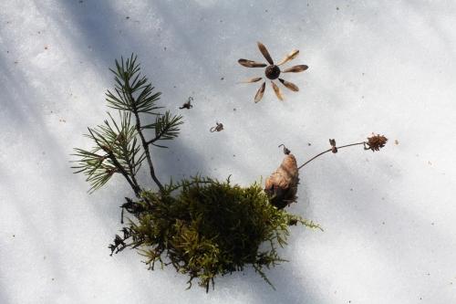 land art,hiver,neige