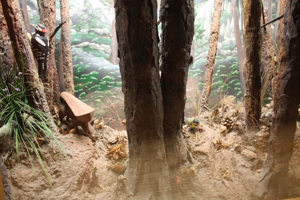 Ecomusée forêt Gardanne (5).JPG