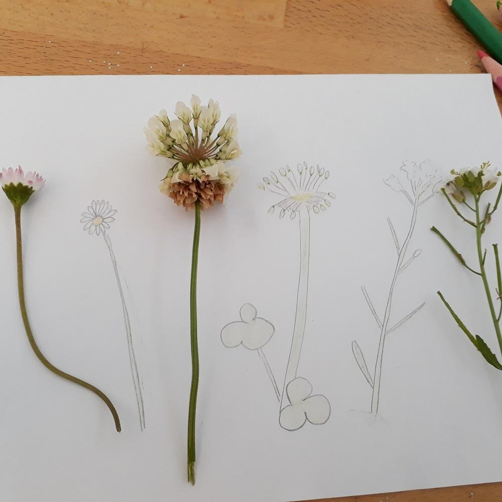 jardin,dessin,fleur