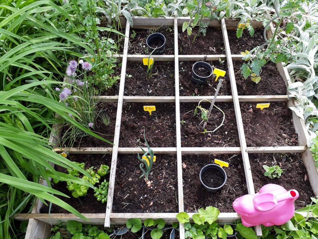 coccinelle,jardin