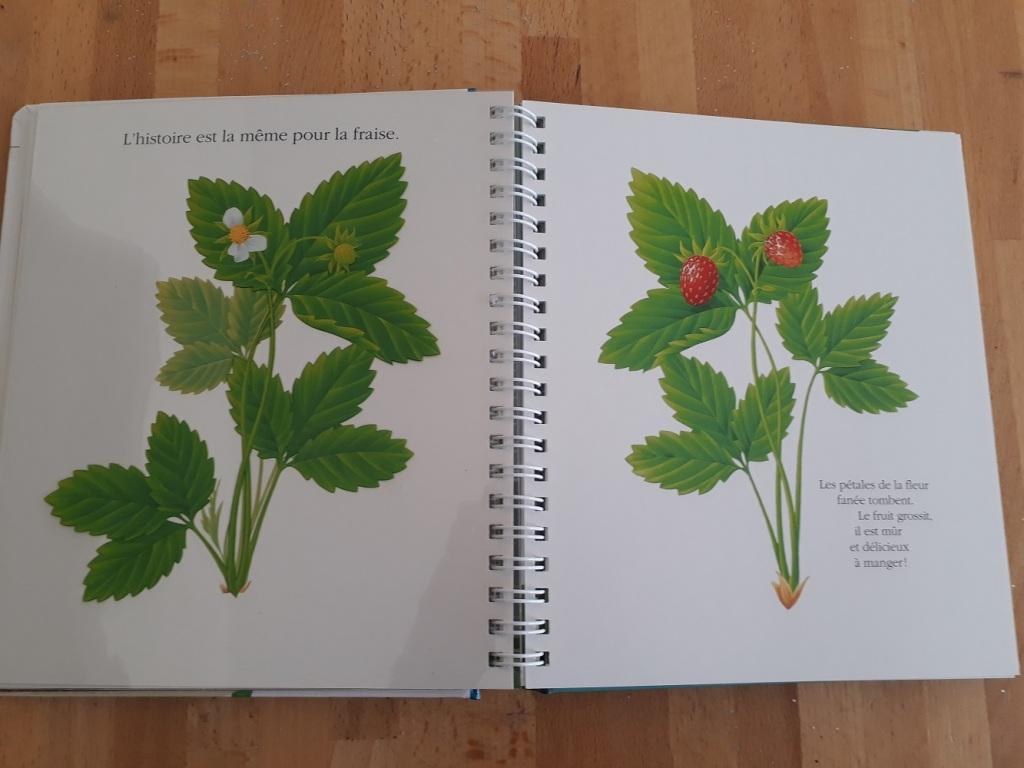 livre,fleur,pissenlit